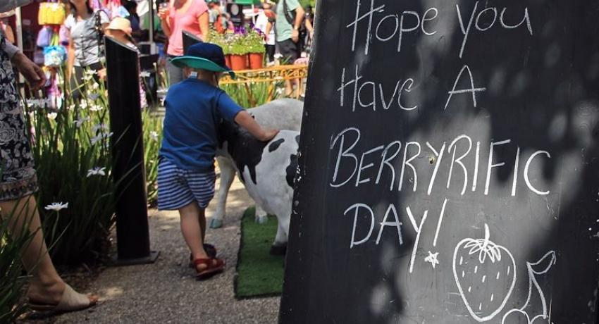 Bacchus Marsh Strawberries and Cherries Weekend